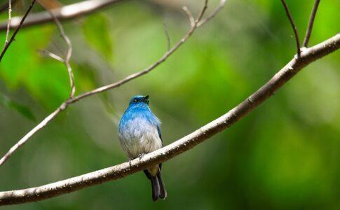 木にとまる青い鳥